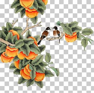 Japanese Persimmon Chinese Painting Gongbi PNG