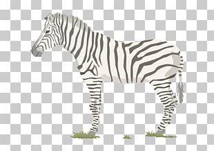 Zebra Food Chain Food Web Trophic Level PNG