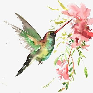 Watercolor Bird PNG
