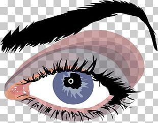 Eye Color Eye Color Eyebrow Human Eye PNG