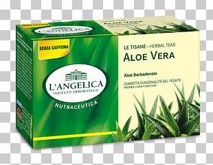 Herbal Tea Ginger Tea Amaro Fennel PNG