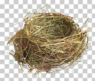 Edible Bird's Nest Edible Bird's Nest Bird Nest PNG