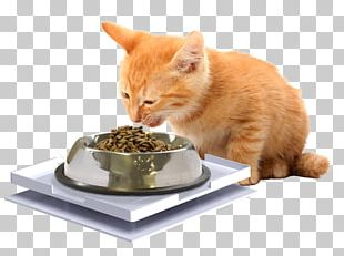 Whiskers Cat Food Dog Kitten PNG