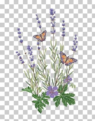 English Lavender Butterfly French Lavender Illustration PNG