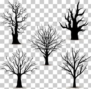 Tree Silhouette Euclidean PNG
