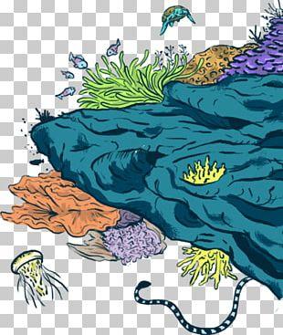 Marine Biology Marine Conservation Ecosystem Marine Mammal Fauna PNG