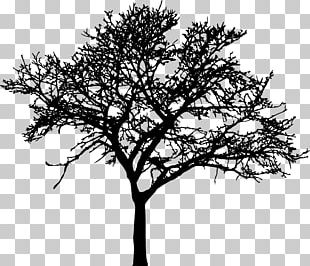 Tree Silhouette Drawing Branch PNG