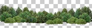 Tree Shrub Garden Desktop PNG