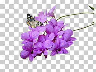 Allopathic Medicine Herbaceous Plant Medicinal Plants Cut Flowers PNG