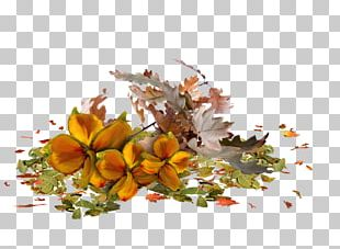 Raster Graphics Computer Graphics PNG