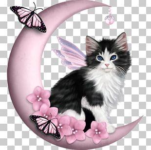 Cat Felidae Kitten Earth Pearl PNG