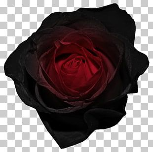 Black Rose Desktop Red PNG