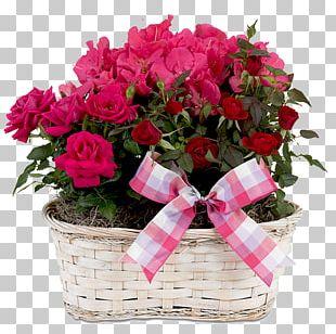 Birthday U041au0441u0435u043du0438u044f Holiday Ansichtkaart Greeting Card PNG