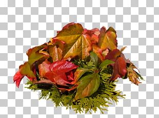 Maple Leaf Japanese Maple Autumn Leaf Color Acer Japonicum PNG