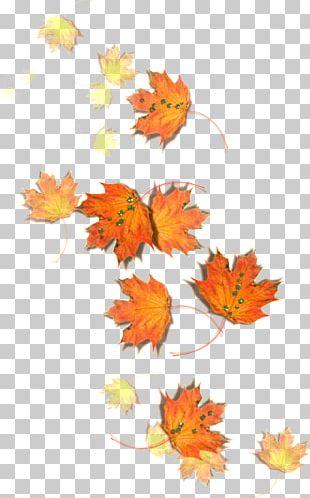Maple Leaf Autumn Edible Mushroom Fungus PNG