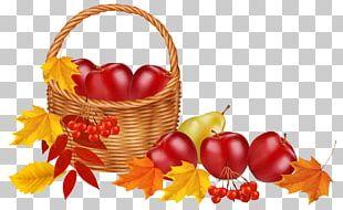 Autumn Leaf Color Fruit PNG