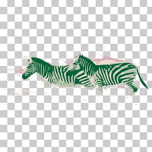 Zebra Illustration PNG