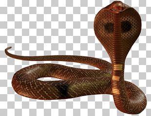 Snake Display Resolution Cobra PNG
