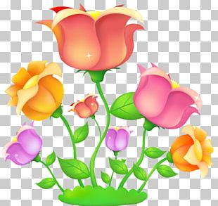 Rose Flower Drawing PNG