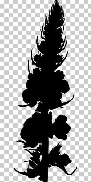 Medicinal Plants Verbascum Nigrum Photography PNG