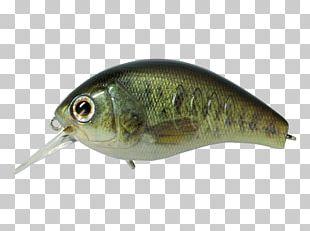 Spoon Lure Oily Fish Korrigan Rod PNG