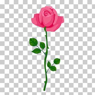 Garden Roses Cut Flowers Floral Design Bud PNG