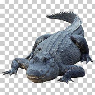 Alligator Crocodile PNG