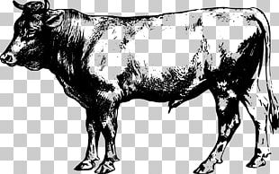 Angus Cattle Beef Cattle PNG