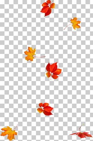 Autumn Leaves Leaf Animation Photography PNG