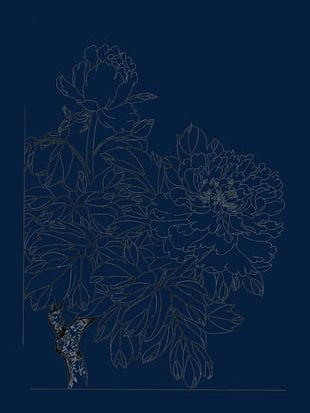Peony Flower Line Drawing PNG