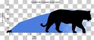Felidae Cycle De Vie Du Tigre Hình Tượng Con Hổ Trong Văn Hóa Bengal Tiger Paper Tiger PNG