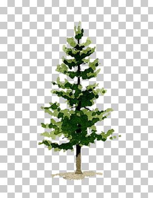 Pine Watercolor Painting Art Evergreen PNG