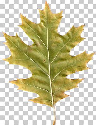 Autumn Leaves Leaf PhotoScape PNG