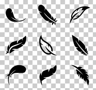 Bird Parrot Feather Computer Icons Wing PNG
