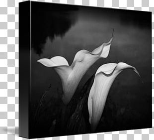 Monochrome Photography Still Life Photography PNG
