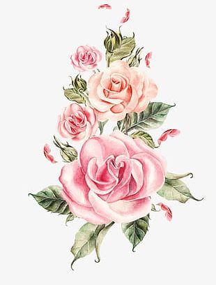 Hand-painted Pink Roses Bouquet PNG