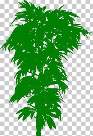 Plant Bonsai Treelet Trunk Leaf PNG