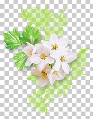 Floral Design Drawing Flower White Green PNG