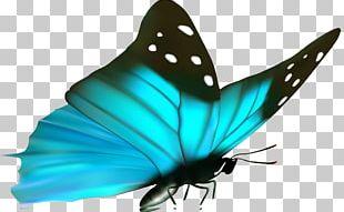 Nymphalidae Rejuvent Medical Spa & Surgery Eye Periorbital Dark Circles PNG
