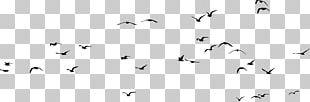 Bird Gulls Silhouette PNG