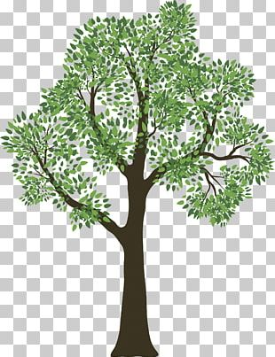 Family Tree Genealogy Child PNG