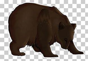 Bear Fauna Fur Terrestrial Animal Snout PNG