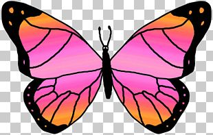 Butterfly Blog PNG