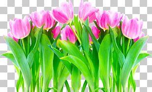 Flower Tulip Allah Petal Desktop PNG