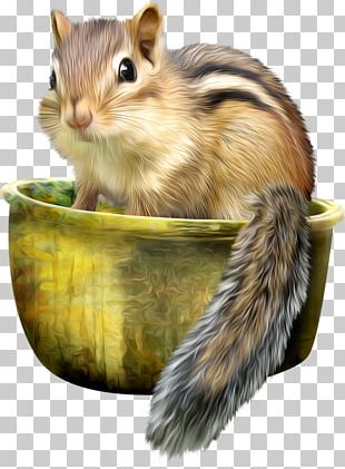 Eastern Chipmunk Squirrel Mississippi River Siberian Chipmunk Least Chipmunk PNG