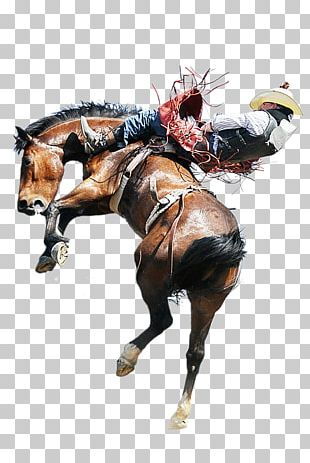 Horse Rodeo Equestrian Bull Riding Bucking PNG