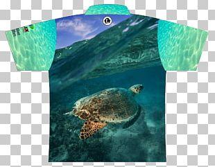 Loggerhead Sea Turtle Ecosystem Marine Biology Fauna PNG