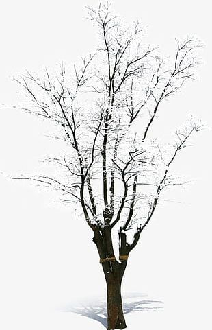 Snow-covered Dead Tree PNG