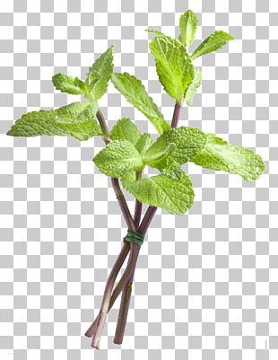 Mint Disease PNG