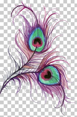 Peafowl Drawing Feather Color PNG